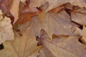 otoño2